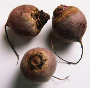 2 lb. Red Beets