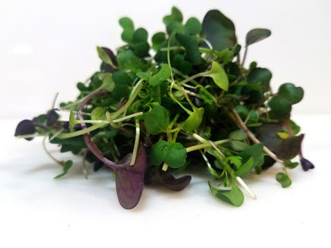 Indiana Local Grown Microgreen - Spicy Chaos Mix - 1oz