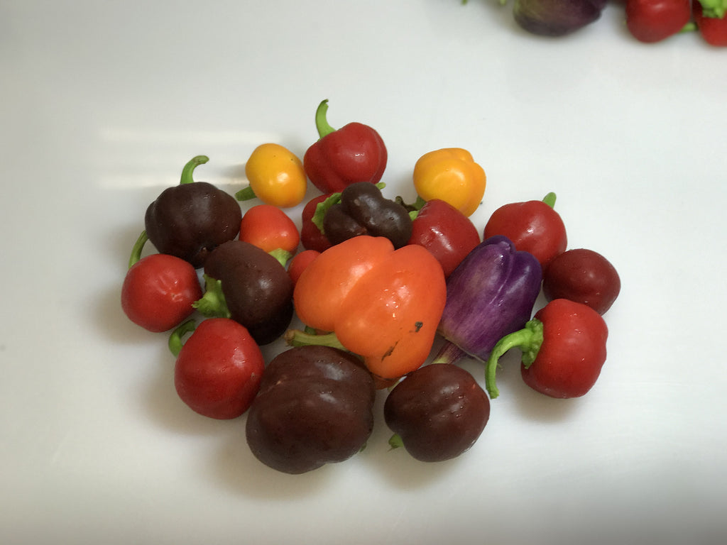 Mixed Organic Baby Peppers 4oz