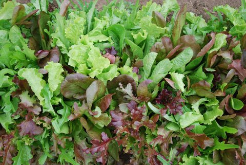 Sustainable Salad Mix 5 oz. bag