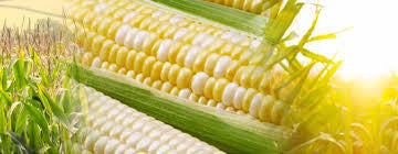 1/2 dozen Sweet Corn