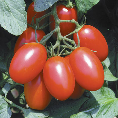 Organic Juliet Grape Tomato- 1 pint