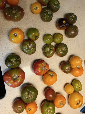 Heirloom Tomatoes (1lb) - Organic