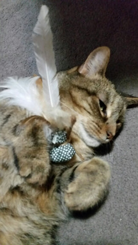 Homemade catnip feather toy