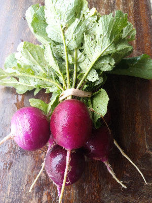Purple Radishes (5-6/bunch)