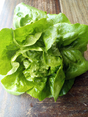Buttercrunch Heirloom Head Lettuce