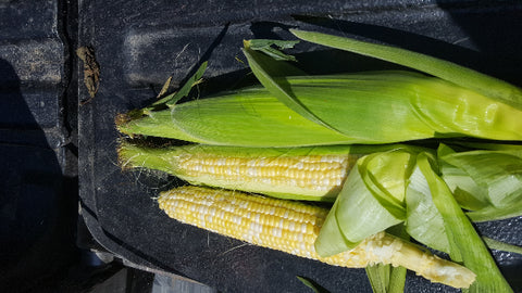 Providence bi color sweet corn (half dozen)