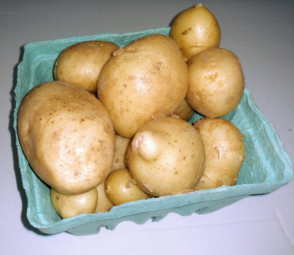 Early White Potato-Family Size