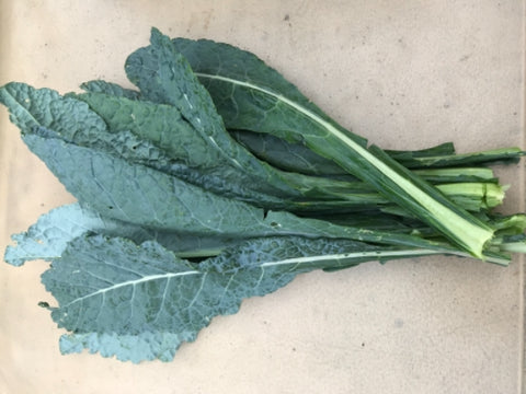 "Fresh Bunch Lacinato ""Dino"" Kale"