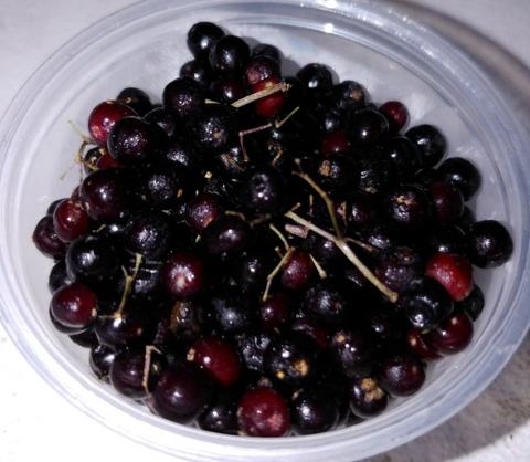 Elderberries-4 oz tub