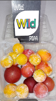 Native Plum Trio-1/2 lb