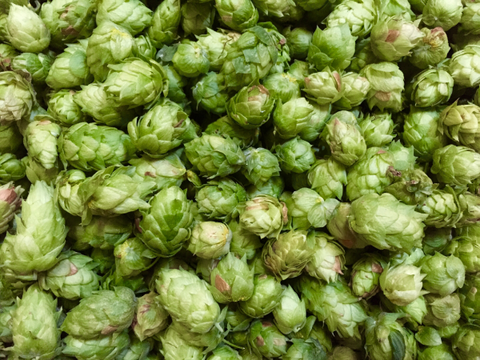 Dehydrated Cascade Hops (2 oz)