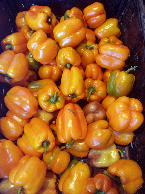 Bell Peppers – Orange – Qty  2