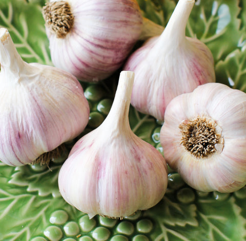 Gourmet Purple Stripe Garlic - 1/2 lb.