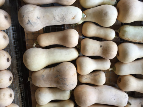 Butternut Squash - Certified Organic - Small