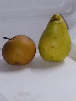 "Duo Pears-Asia ""meet"" Europe - 1 of each, 2 total @ 1.25 lbs"