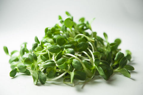 Cabbage microgreens - One Cup