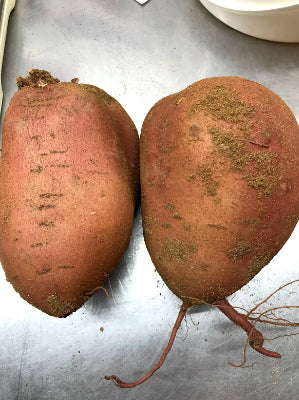 Large Sweet Potatoes 3+ lb.