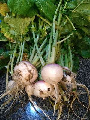 Turnips-by the lb