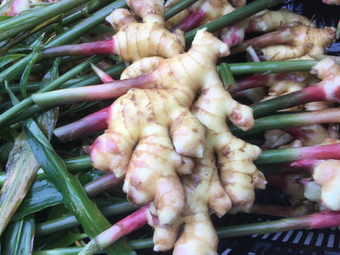 Fresh Baby Ginger - 1# Organic