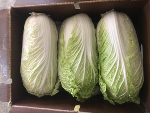 Imperfect USDA Cert. Organic Chinese Cabbage 1 head