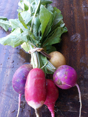 Rainbow Radishes (5-6/bunch)