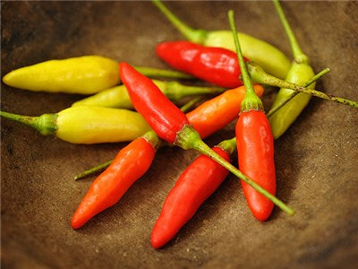 Seeds: Tabasco Pepper