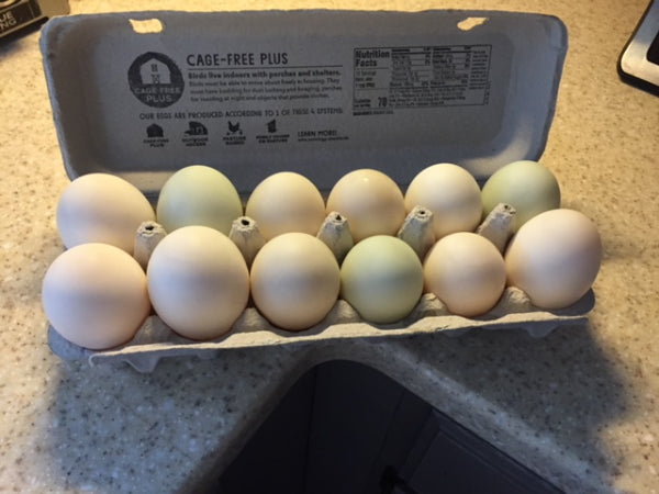 DUCK Eggs 1/2 Dozen