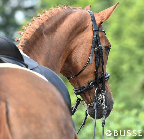 Busse Bridles at Eqclusive