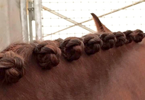 How to plait a mane - blog by international eventing groom Emma Stewart - Eqclusive, eqclusive.com