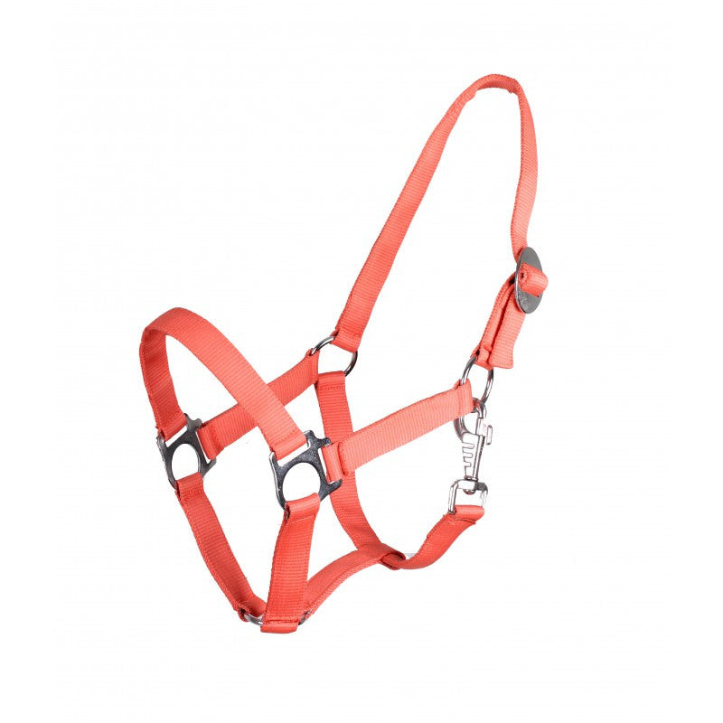 QHP Head Collar Slide Shetland / Hot Coral - Eqclusive  - 12