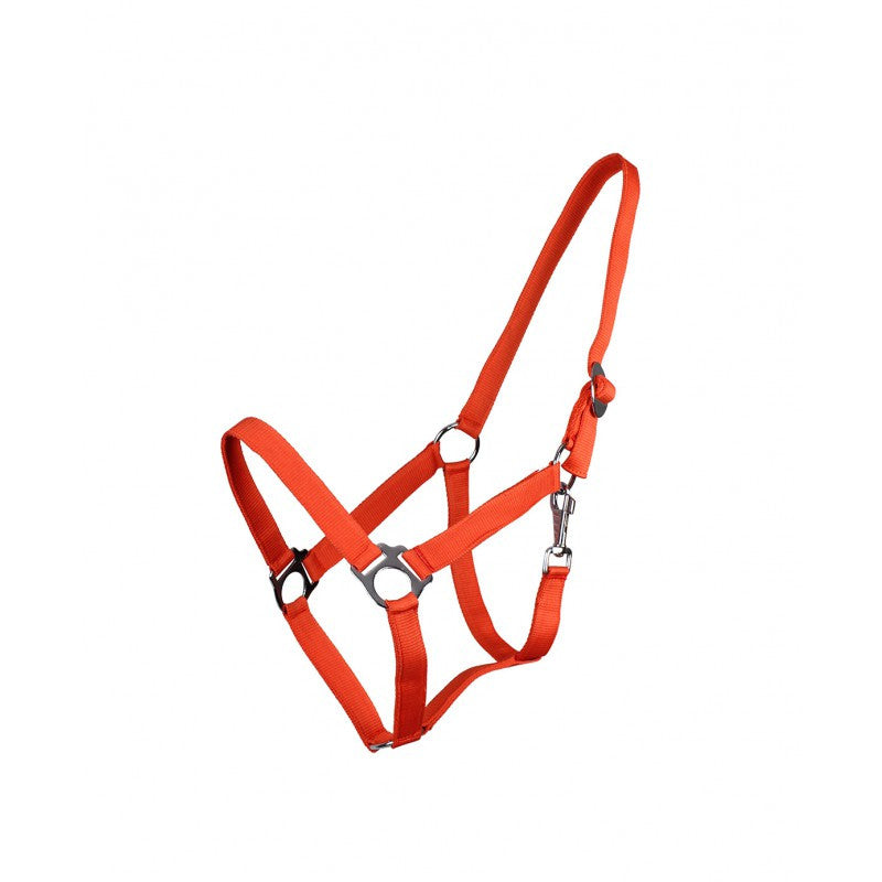 QHP Head Collar Slide Shetland / Orange - Eqclusive  - 3