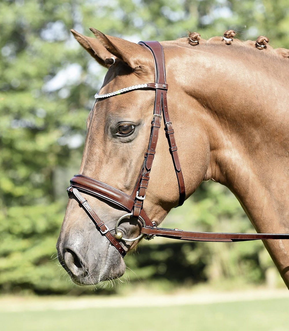BUSSE Bridle MATERA