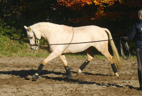 BUSSE Lunging Aid COTTON  - Eqclusive  - 1
