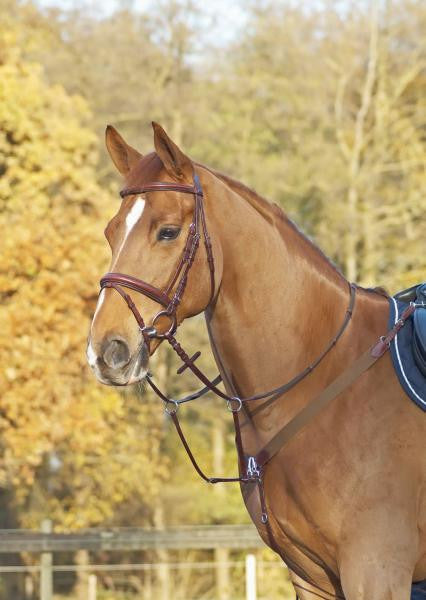 BUSSE Breastplate CAMBRIDGE Full / Cognac/Stainless Steel - Eqclusive