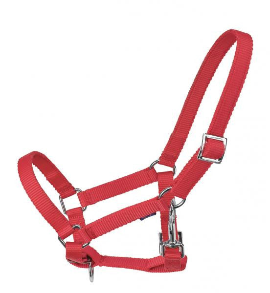 BUSSE  Headcollar YOUNG Foal / Red - Eqclusive  - 4