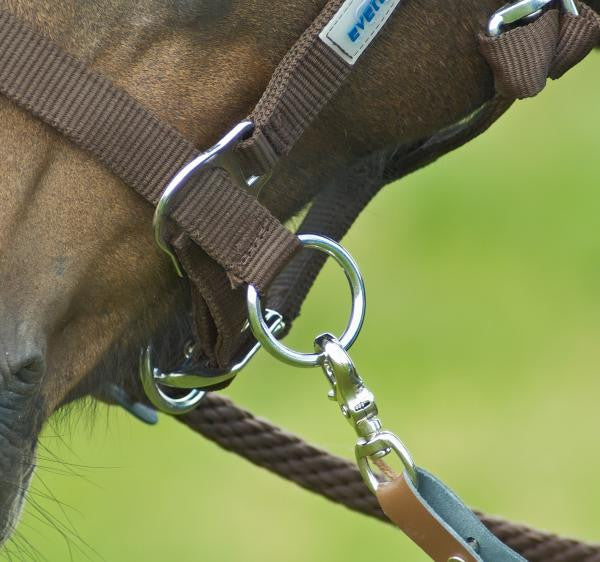 BUSSE Headcollar RIDING  - Eqclusive  - 2