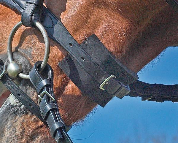 BUSSE Bridle-Pad EVERLINE  - Eqclusive  - 2