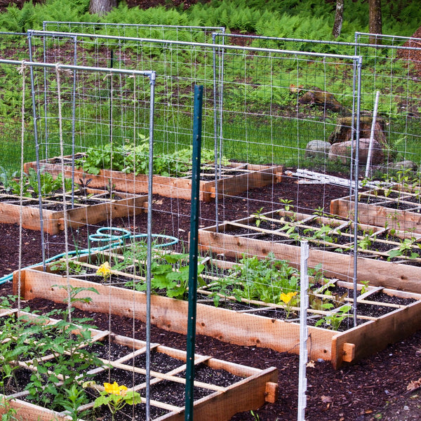 How to Start Growing in a Raised Garden Bed