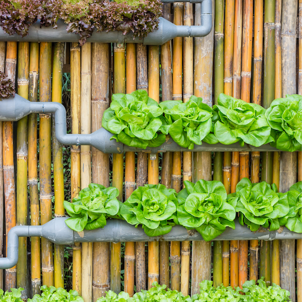 What You Should Know About Vertical Gardening