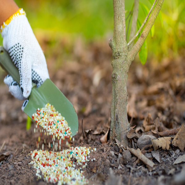 5 Common Fertilizing Mistakes You Want to Avoid