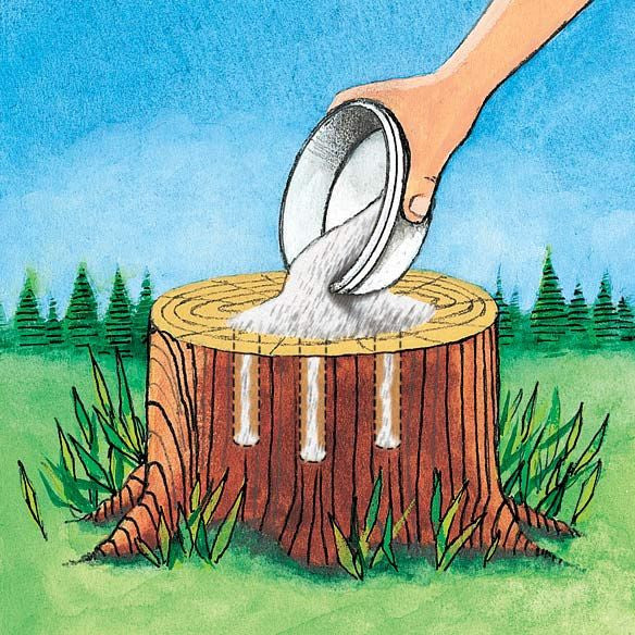 Epsom Salt Formula For Stump Removal