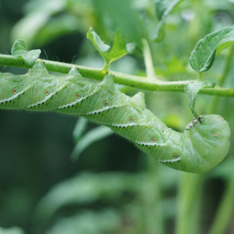 5 Harmful Garden Insects and How to Eliminate Them