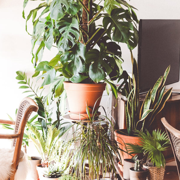 5 Plants That Improve the Air Quality in Your Home