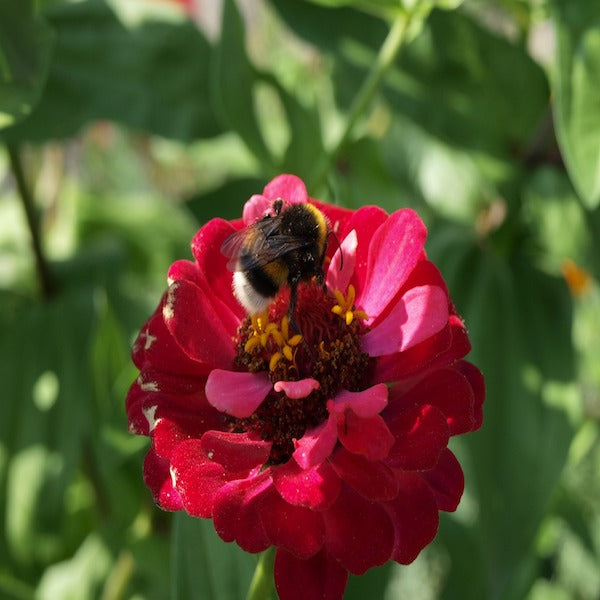 5 Types of Pollinators And How to Attract them