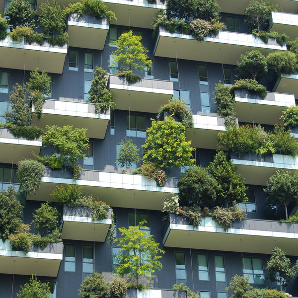 Urban Gardening: Planting in the Concrete Jungle and How You Can Get Started