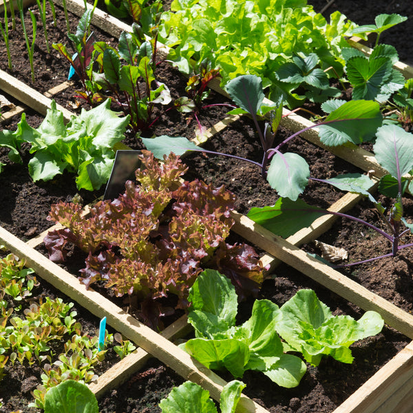 Square Foot Gardening: Is it the Best Choice?