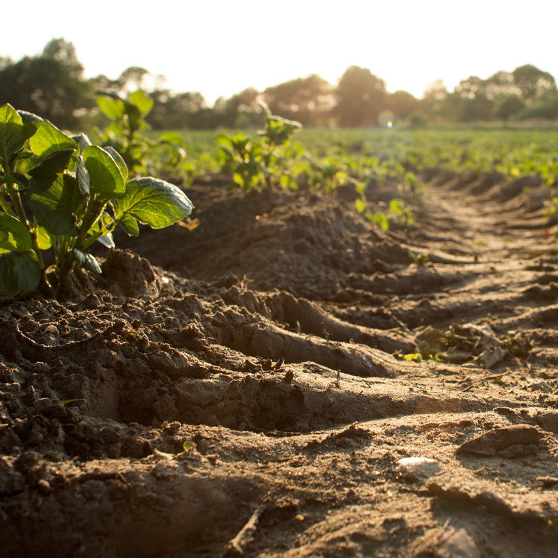 How to Improve Soil Health With Soil Amendments