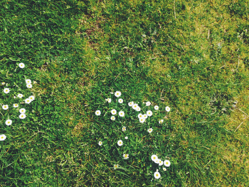 A Guide to Greener Grass - Selecting the Proper Fertilizer for Your Lawn