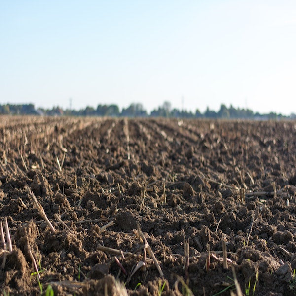 How to Nourish Your Soil in the Winter